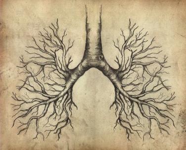 Lungenbäumchen